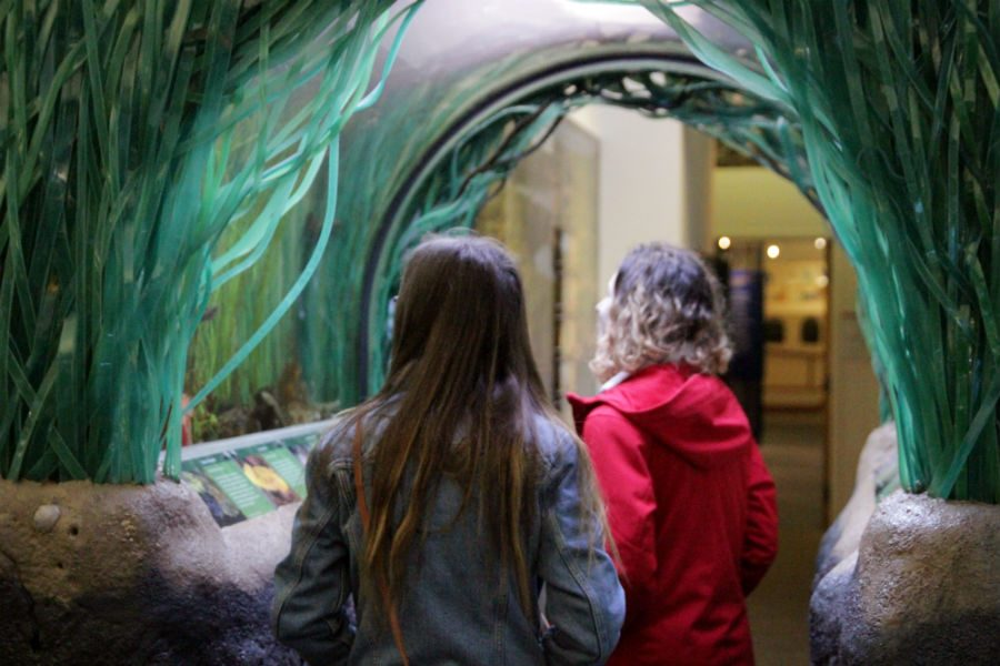 Ecology club members Ivy Ewing ('20) and Nadine Christensen ('17) examine the aquarium at the Youth Earth Summit at the Padilla Bay Reserve in Mount Vernon on Friday, January 6th.
